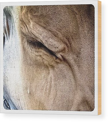 Cow Wood Prints