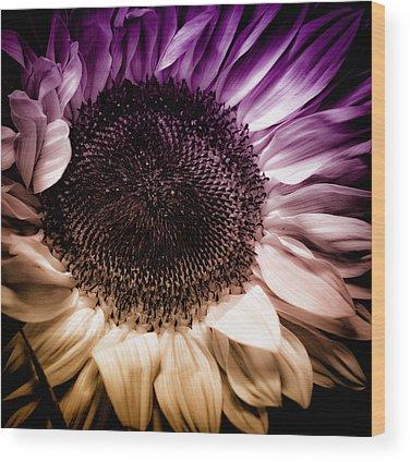 Sunflower Wood Prints