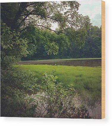 Trail Wood Prints