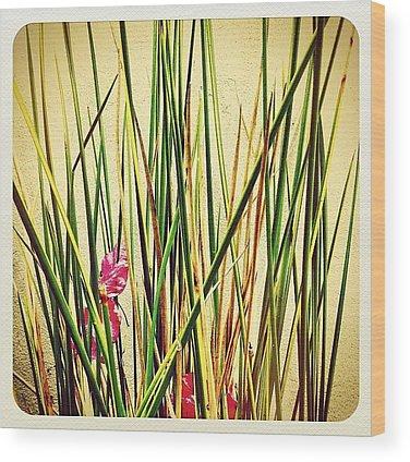Plant Wood Prints