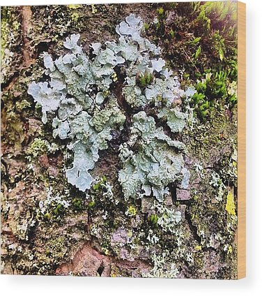 Lichen Wood Prints