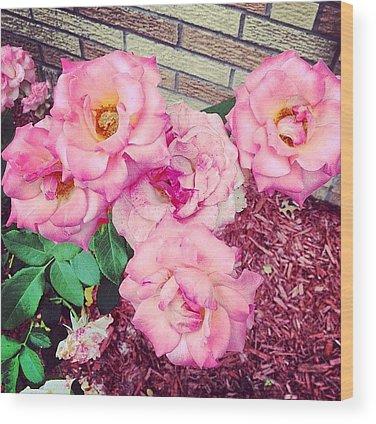 Roses Wood Prints