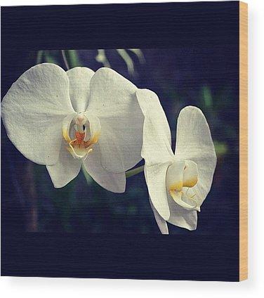 Orchids Wood Prints