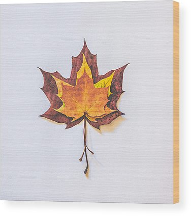 Autumn Leaves Wood Prints