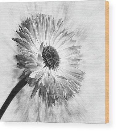 Bloom Wood Prints