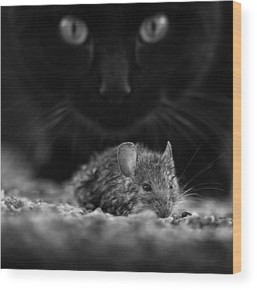 Mice Wood Prints
