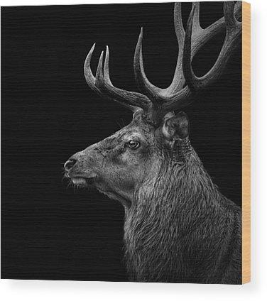 Deer Wood Prints