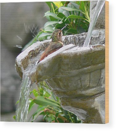 Bird Bath Wood Prints