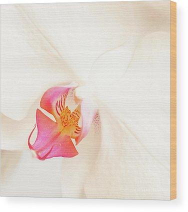 Phalaenopsis Wood Prints