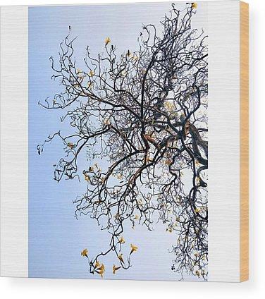 Autumn Wood Prints