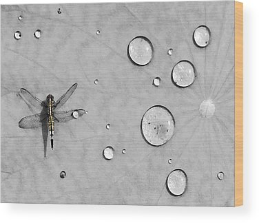 Dragonfly Wood Prints