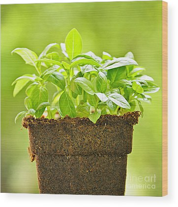 Potted Plant Wood Prints