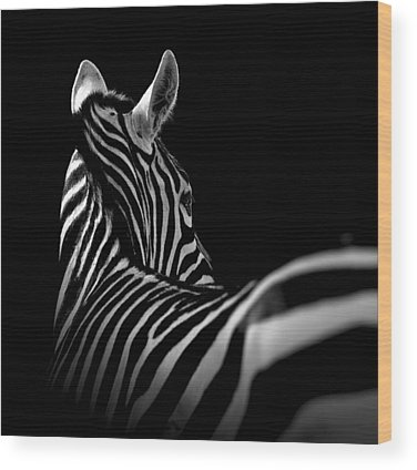 Zoo Wood Prints