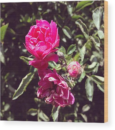 Botanical Wood Prints