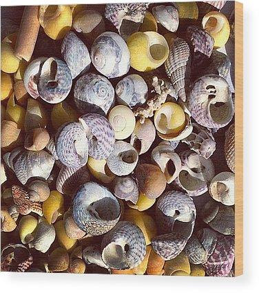 Shell Wood Prints
