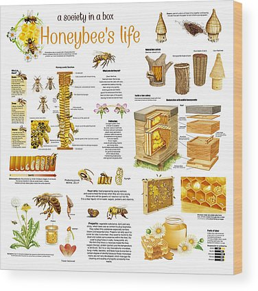 Honeybee Colony Wood Prints