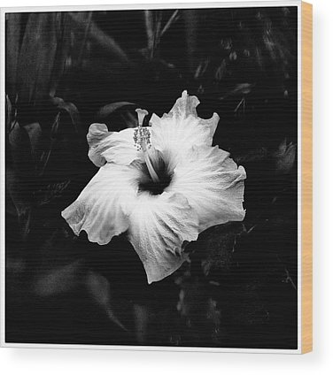Hibiscus Wood Prints