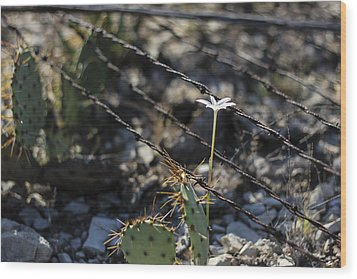 Wood Print featuring the photograph  A Flower Among Thorns by Amber Kresge