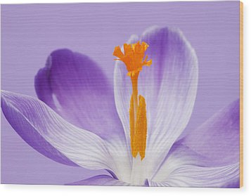 Abstract Purple Crocus Wood Print