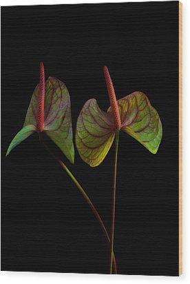 Anthurium 1 Wood Print by Thomas Born