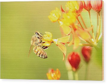 Bee On Milkweed Wood Print