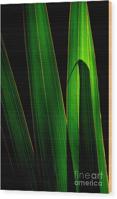 Wood Print featuring the photograph  Black And Green by Michelle Meenawong