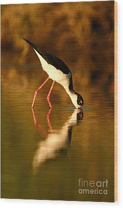 Wood Print featuring the photograph  Black-necked Stilt Reflection by John F Tsumas