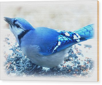 Bright Blue Jay  Wood Print