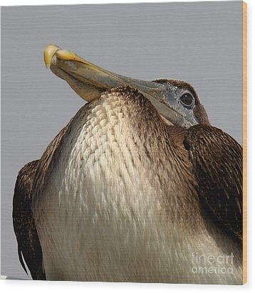 Wood Print featuring the photograph  Brown Pelican  by Bob and Jan Shriner