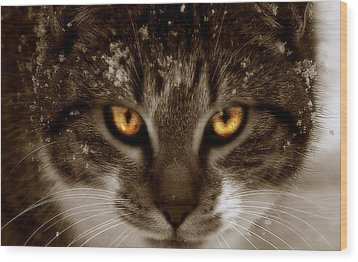Wood Print featuring the photograph  Cat Eyes by Yvonne Emerson AKA RavenSoul