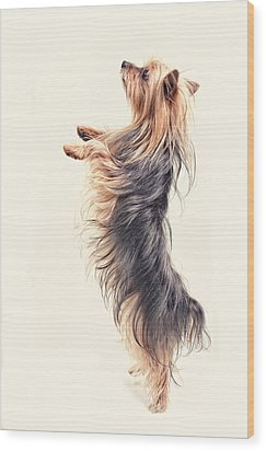 Dancing Yorkshire Terrier Wood Print by Susan Stone
