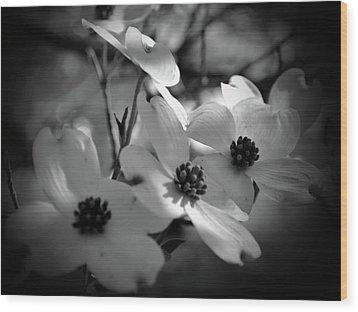 Dogwood Blossoms-bk-wh-v Wood Print
