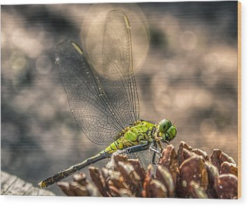 Wood Print featuring the photograph  Erythemis Simplicicollis by Rob Sellers