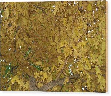 Wood Print featuring the photograph  Fall Amur Maple  by J L Zarek