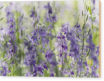 Fields Of Lavender  Wood Print by Saija  Lehtonen