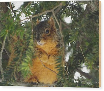 Fox Squirrel Wood Print