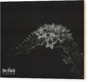 Gooseneck Loosestrife Wood Print