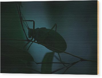 Wood Print featuring the photograph  It's A Bug... by Tammy Schneider