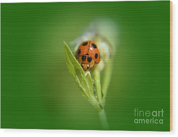 Wood Print featuring the photograph  Ladybug by Michelle Meenawong