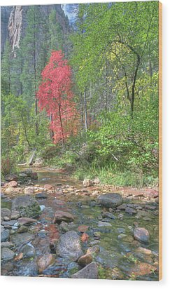 Wood Print featuring the photograph  Lone Maple Fall Creek by Harold Rau