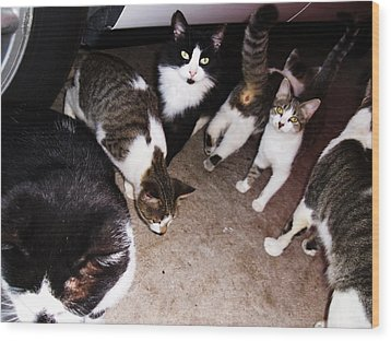 Mama Cat And Kittens Wood Print by Trudy Brodkin Storace