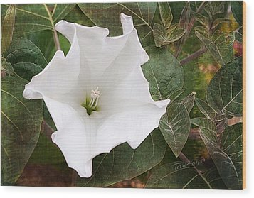 Moonflower Wood Print