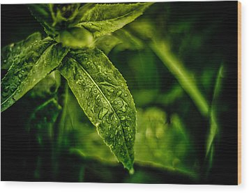 Wood Print featuring the photograph  Morning Dew by Jason Naudi Photography