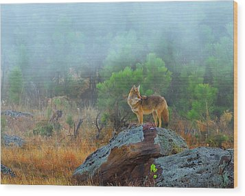 Wood Print featuring the photograph '' Morning Patrol '' by Kadek Susanto