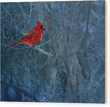 Northern Cardinal Wood Print by Thomas Young