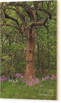 Oak Tree And Dame's Rocket Wood Print by Randy Pollard