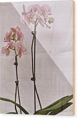 Wood Print featuring the photograph  Orchids In The Window by Ira Shander
