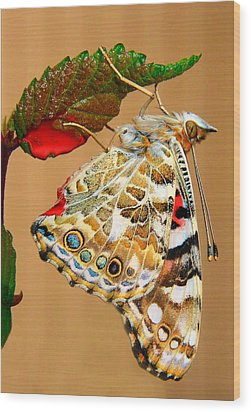 Painted Lady Butterfly Wood Print by David and Carol Kelly