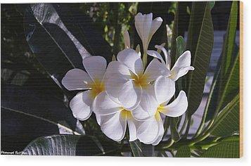 Plumeria  Wood Print by Gornganogphatchara Kalapun