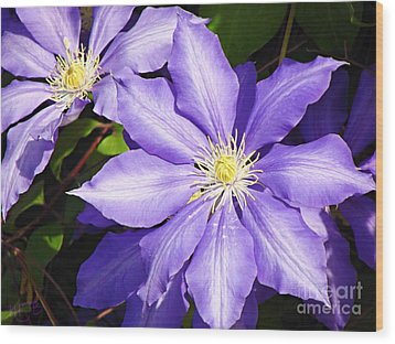 Pretty Purple Clematis Wood Print by Mindy Bench